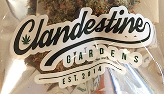 Marijuana Review: 9 LB x Strawberry by Clandestine Gardens